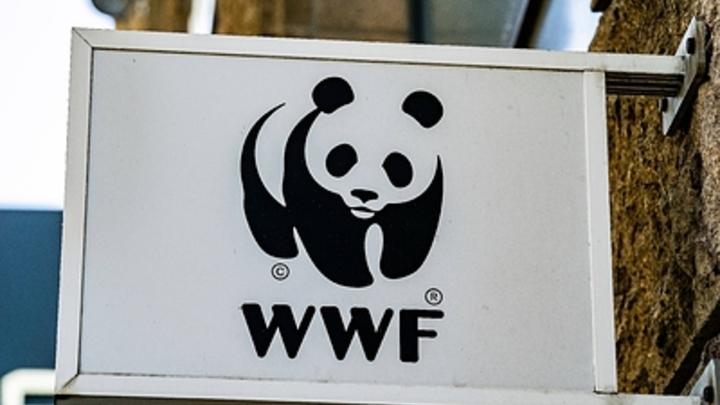 Леопард, сайгак, кречет: Экологи предсказали России вымирание шести видов животных