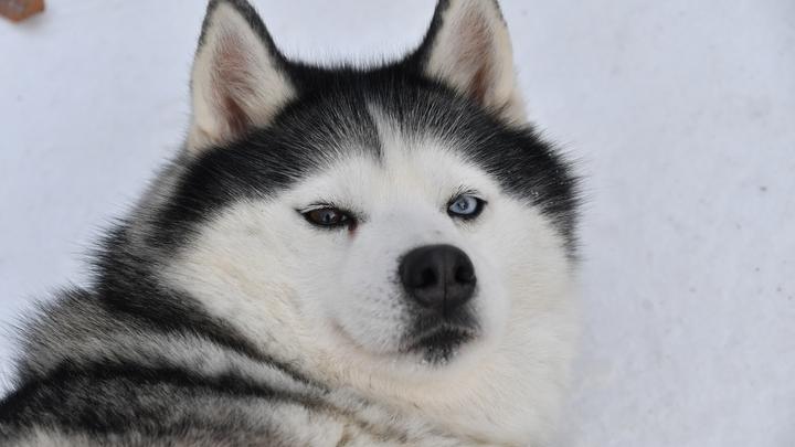 Родом из Сибири: Страшный собачий рак по миру развезли мореплаватели - ученые