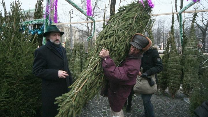 Когда в Челябинске откроются елочные базары