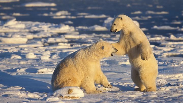 Мы должны узнать, каково это: В отсутствие ледоколов США отправляют в Арктику авианосец