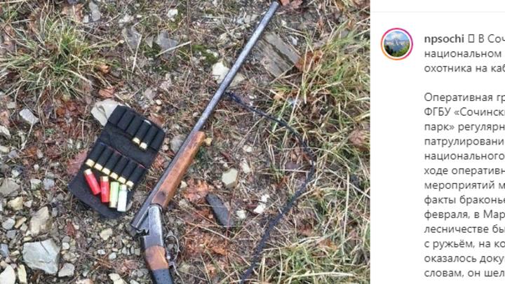 В Сочинском нацпарке за охоту на кабана задержали браконьера