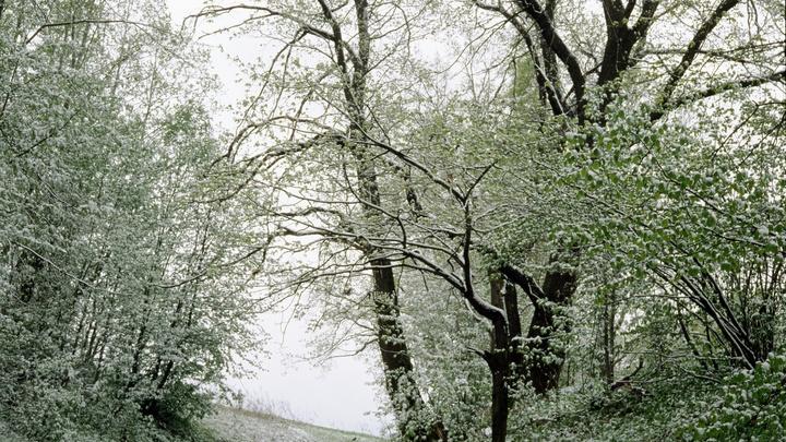 На следующей неделе в Новосибирской области похолодает до -16 градусов