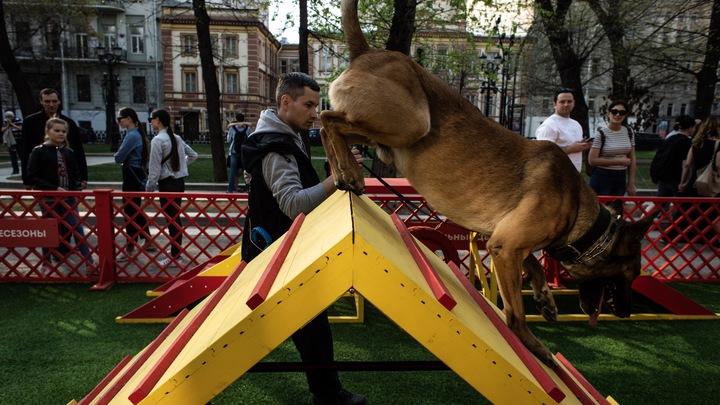Не украл, а спас: Собака выжила благодаря вору