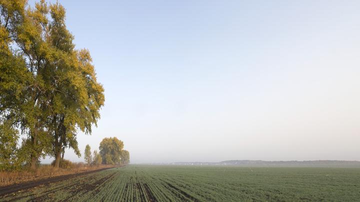 Фермеры в панике: Ржавчина пшеницы распространяется с угрожающей быстротой