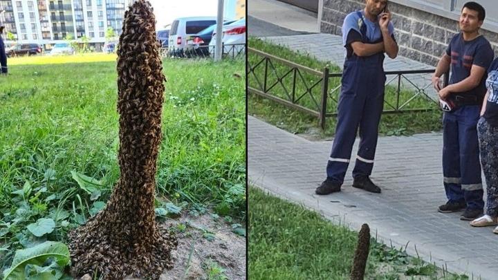 Почему пчелы решили построить в Петербурге мини Лахта-центр