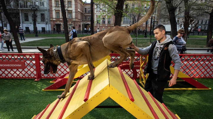 В Октябрьском районе Владимира оборудуют две площадки для выгула животных