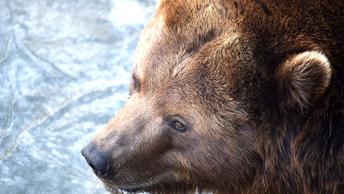 Украинские артисты оставили на парковке в Самаре клетки с цирковыми медведями