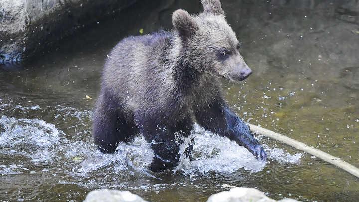 Не кряхти, маленький: Рыбаки спасли любопытного медвежонка