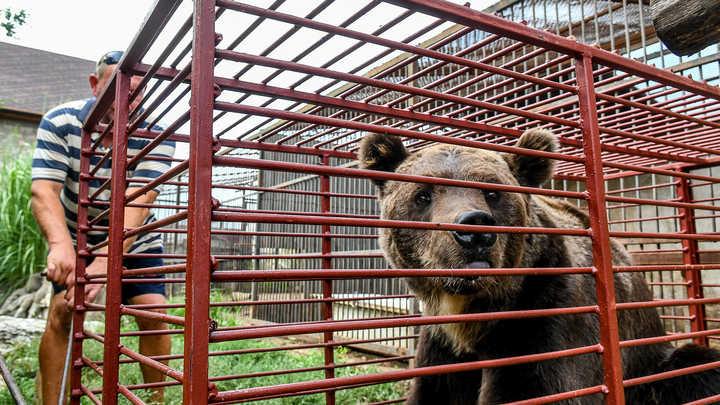 Душили малыша и смеялись: Еле живого медвежонка спасли от толпы мигрантов