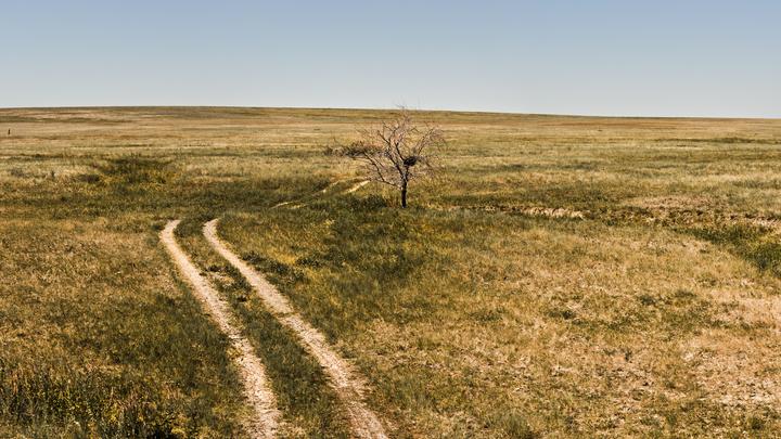 Строительство трассы М-12 может уничтожить один из последних участков степи в Нижегородской области