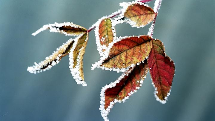 До -1 градуса: В Ростовской области ожидаются заморозки
