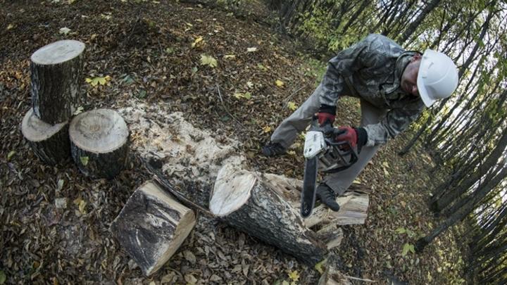 В Кузбассе будут судить банду черных лесорубов