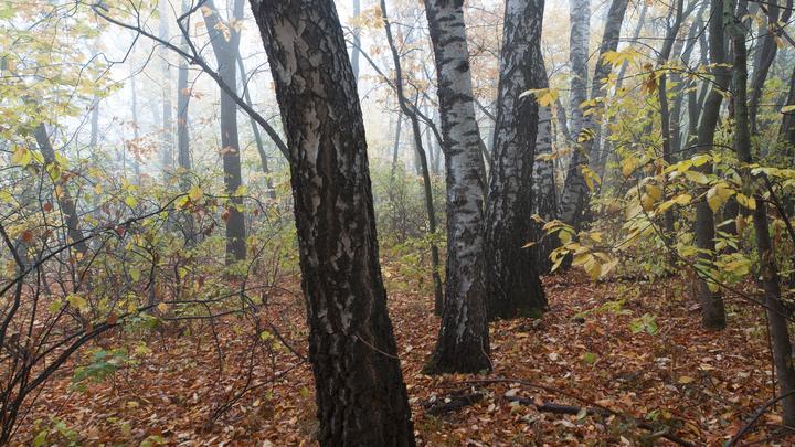 В Ленобласти завод забетонировал лес