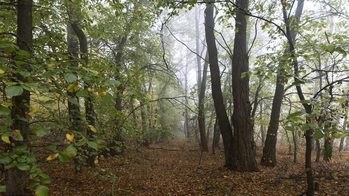 Сатанисты признались в серии ритуальных убийств в лесах Ленобласти и Карелии. Главное