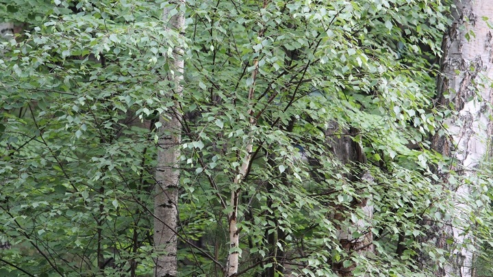 Сотрудник МЧС Беларуси нашел в лесу 3-летнюю девочку