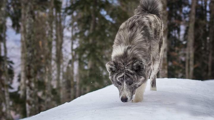 Привела прямо к телу: В Сочи служебная собака помогла найти погибшего мужчину