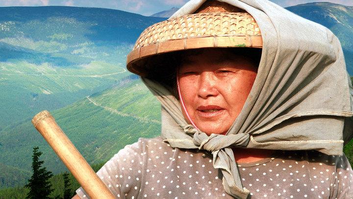 Миллион гектаров для китайцев: Правда и домыслы, выгоды и угрозы