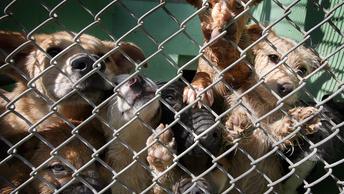 Владельцы приюта умертвили более 200 собак под Тверью ради экономии
