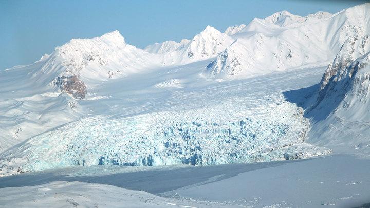 Встречали только в летописях: В Антарктиде обнаружили неизвестное существо