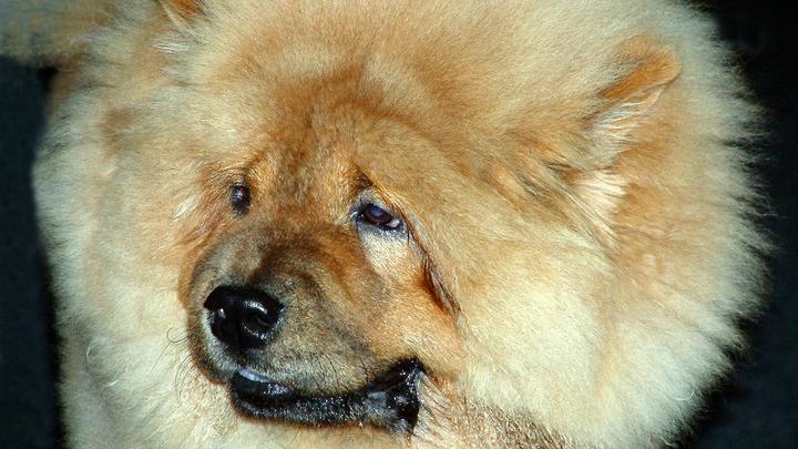 Убийства собак сошли алтайской живодёрке с рук: Полиция нашла смягчающее обстоятельство