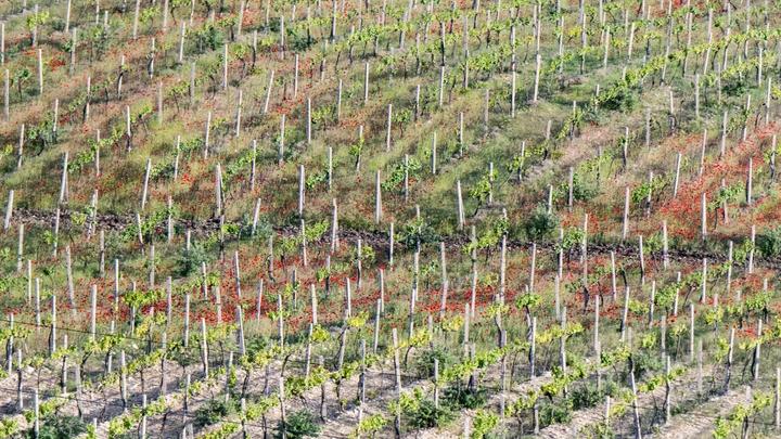Круто, хорошо: Ресторатор объяснил плюсы запрета импортного вина