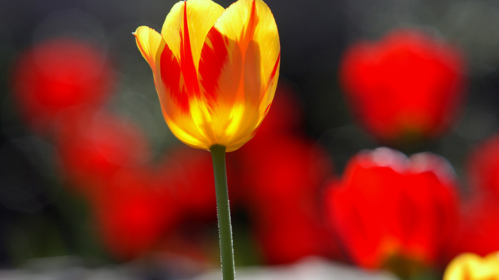 Эластичность лепестков: Роспотребнадзор раскрыл секреты выбора свежих цветов