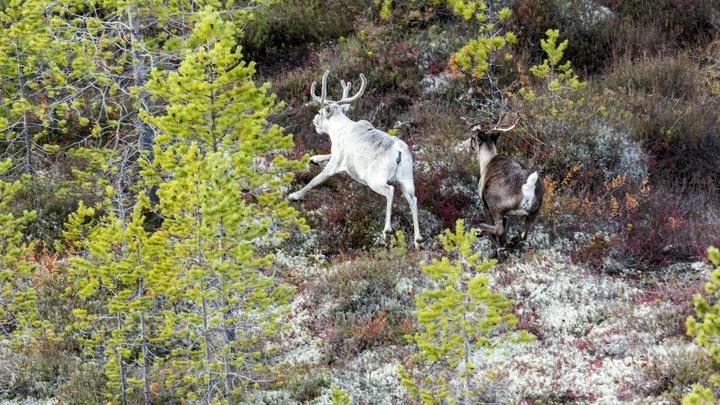 Подлежит восстановлению: Минприроды установило правила возрождения лесов на Урале и на Камчатке