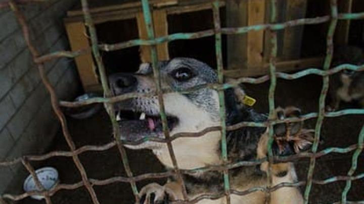Гурулёв о бродячих животных: проблема не в собаках, проблема в голове