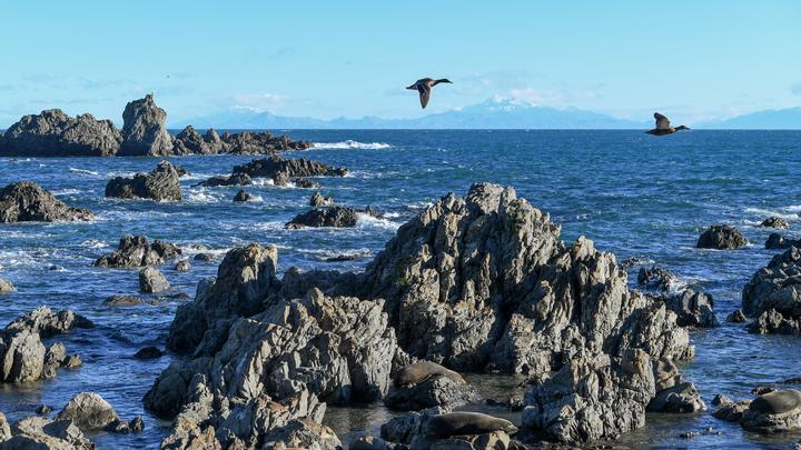 «Пульсирующее существо» напугало туристов на пляже в Новой Зеландии