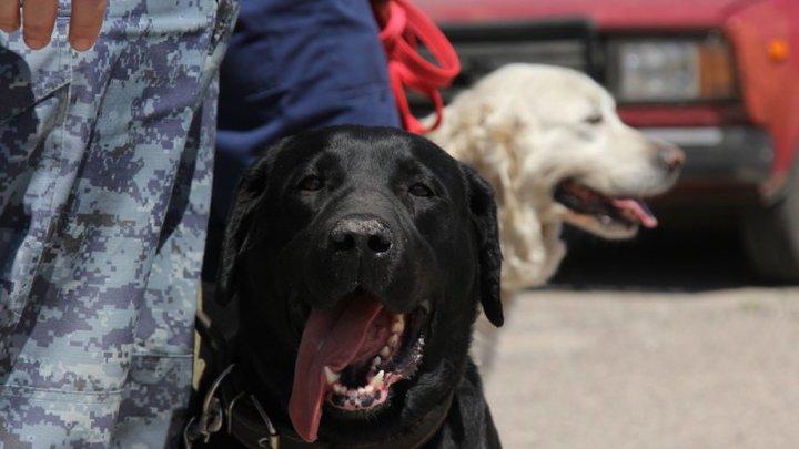 Перечень дворняжек по окрасам: Кинологи объяснили, почему список опасных пород собак ничего не дает