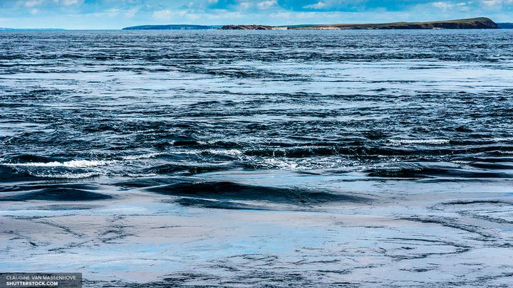 Рыбаки сделали фото двухголового дельфина вида морская свинья