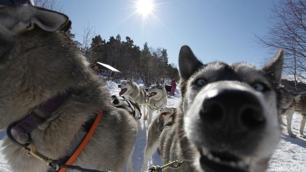 Первый в зимнем сезоне: В Кавказском заповеднике заработал маршрут «Хаски в Лагонаках»