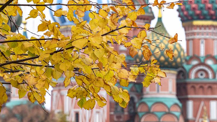 Погода в Москве на выходные 25 и 26 сентября: Началась золотая осень