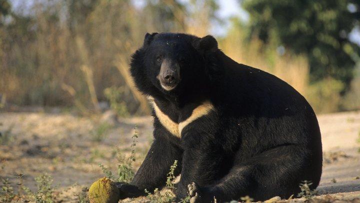 В России медведи не по улицам ходят, а ездят на авто. Британцы признали: Зато машину не угонят