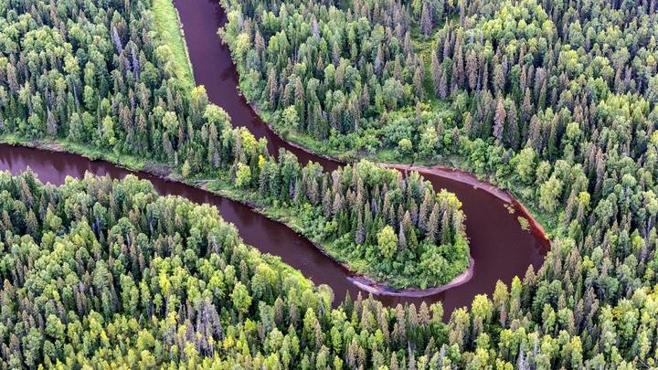 Россия готова запретить вывоз леса в Китай. Решение изменят при восстановлении потерь