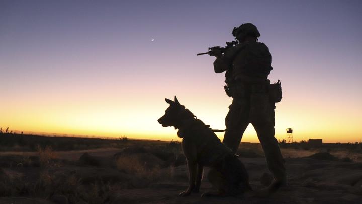 Кинолог не стала скрывать судьбу брошенных солдатами США в Кабуле собак: У них нет будущего