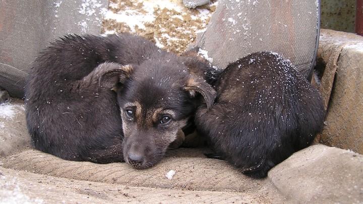 Будет сниться в кошмарах: в Челябинске нашли кладбище домашних животных