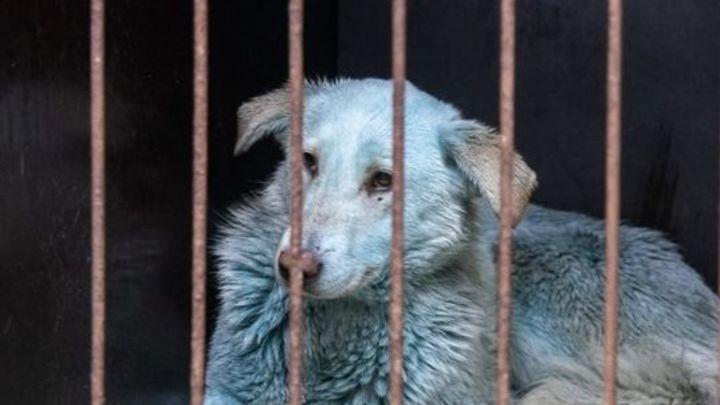 Синих собак, отловленных в Дзержинске, выпустят обратно в промзону