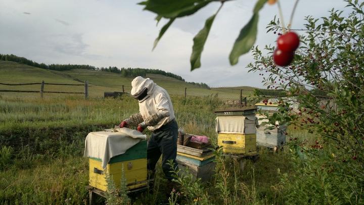 На Кубани после массовой гибели пчел возбудили уголовное дело