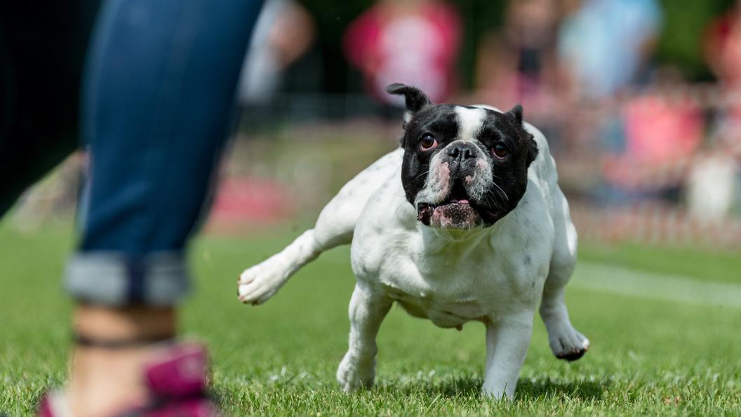 Ученые выяснили, как собаки могут продлить жизнь хозяев