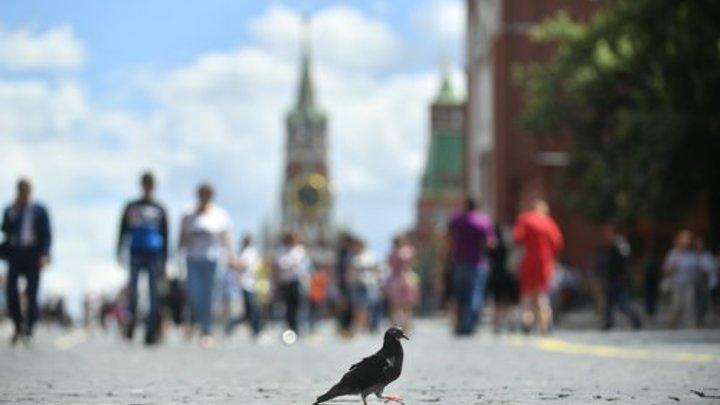Это все тикток, воспитывает тварей: Школьницы наказали голубя, ощипав его заживо