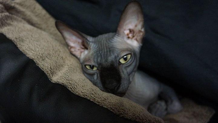 Совпадение? Кот, о котором, очнувшись, спрашивал Бари Алибасов, исчез из его квартиры