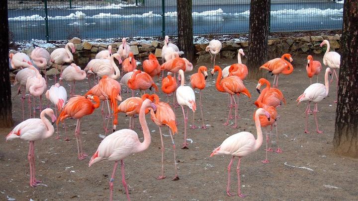 Взоопарке столицы родились 4 птенца фламинго