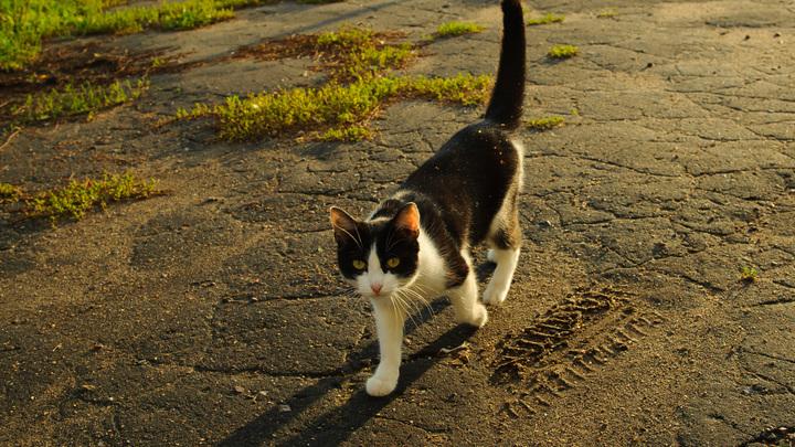 Ты куда? Ты меня ещё не покормил: Хозяин разыграл кота трюком с исчезновением