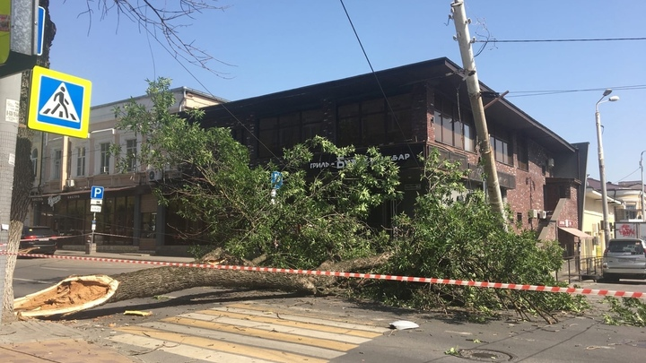 В Ростове упавшее дерево парализовало движение транспорта в центре города