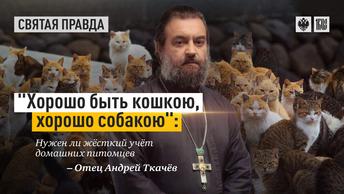 Хорошо быть кошкою, хорошо собакою: Нужен ли жёсткий учёт домашних питомцев — отец Андрей Ткачёв