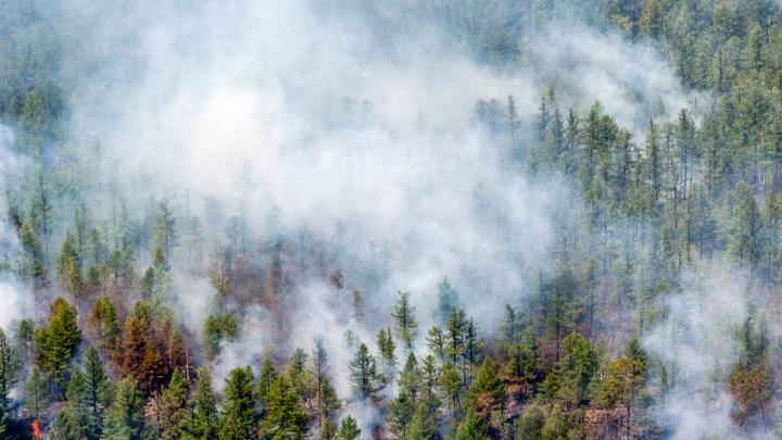 В Свердловской области дым от лесного пожара затянул трассу Екатеринбург-Курган