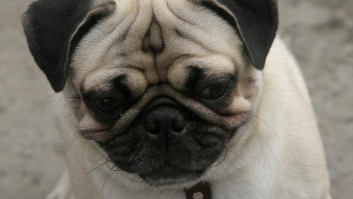 Предотвратить преждевременную смерть легко: Ученые советуют завести собаку