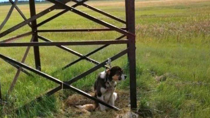 В Челябинской области спасли собаку, которую оставили умирать в поле