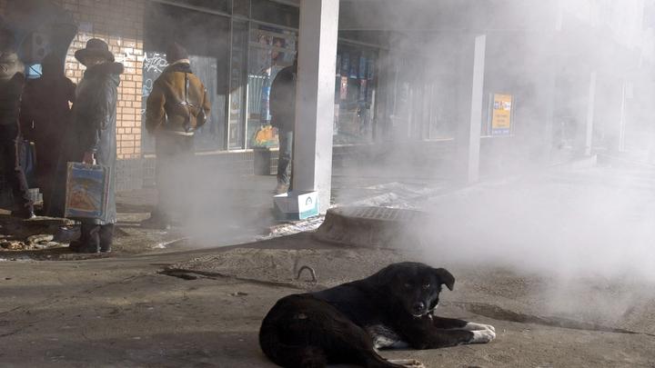 Покрытый гудроном до кончика хвоста: Волонтеры рассказали трогательную историю спасения пса